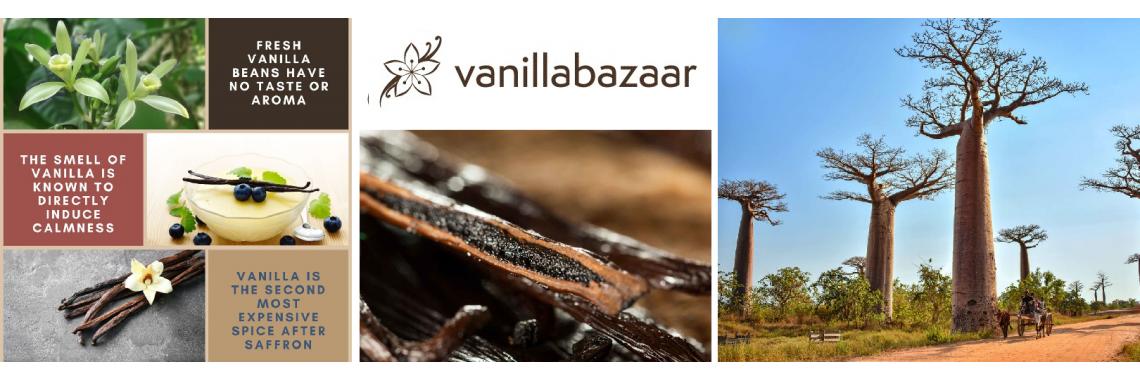vanillabaazar